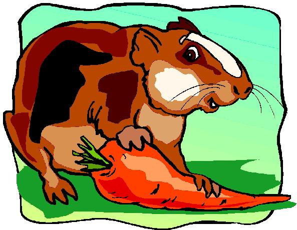 Meerschweinchen cliparts