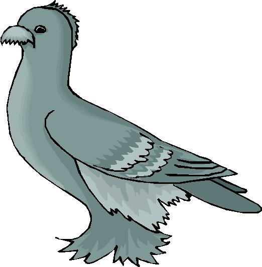Tauben cliparts
