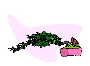 Bonsai cliparts