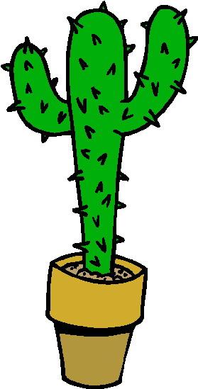 Kaktus bilder