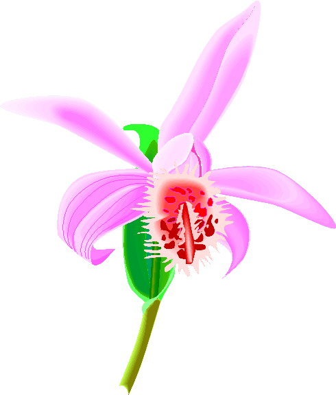 Orchidee cliparts