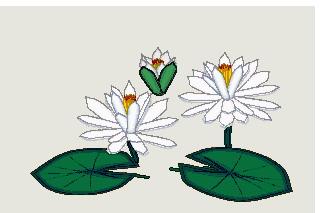 Seerose cliparts