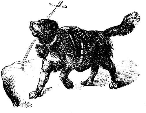 Schwarz weiss hunde hunde bilder