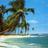 Palmen icons bilder