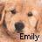 Emily icons bilder