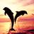 Delfin icons bilder