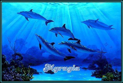Myrugia namen bilder