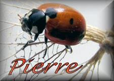 Pierre namen bilder