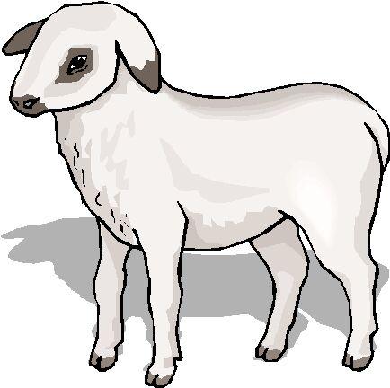Schafe ostern bilder
