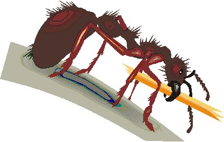 Ameisen tiere bilder