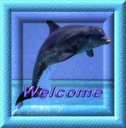 Delfine tiere bilder