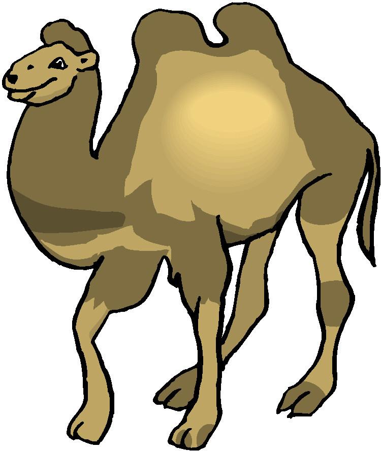 Kamele tiere bilder