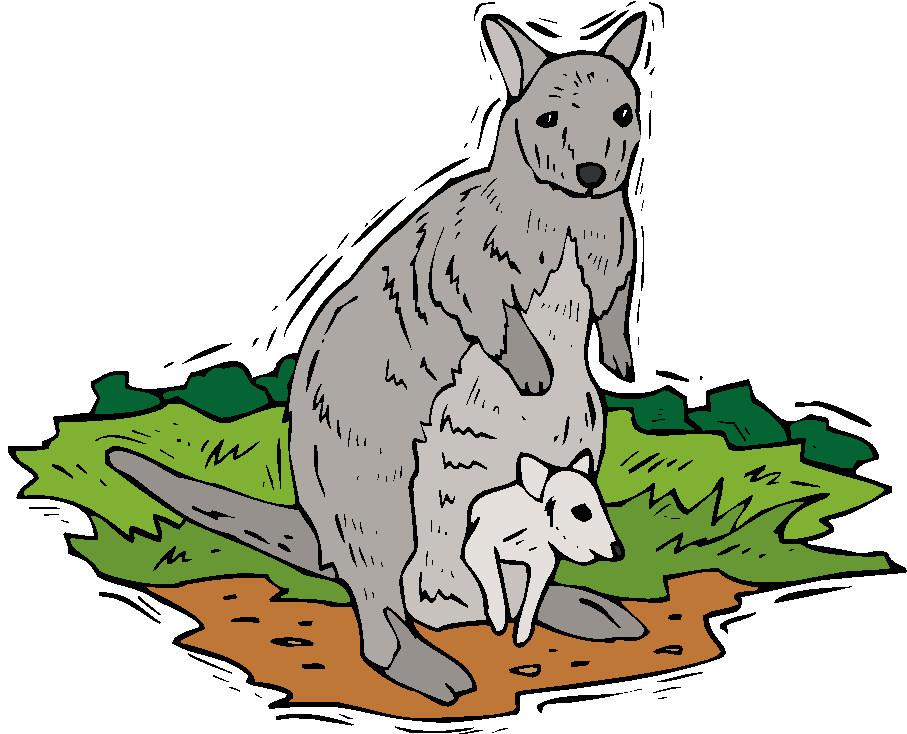 Kanguru tiere bilder