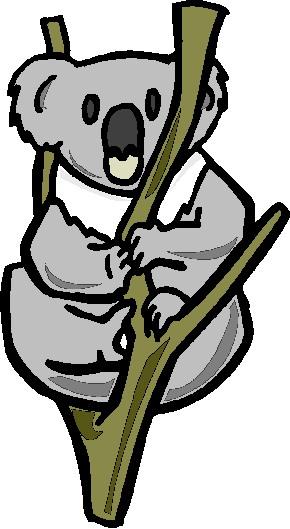 Koala tiere bilder