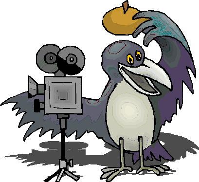 Krahe tiere bilder