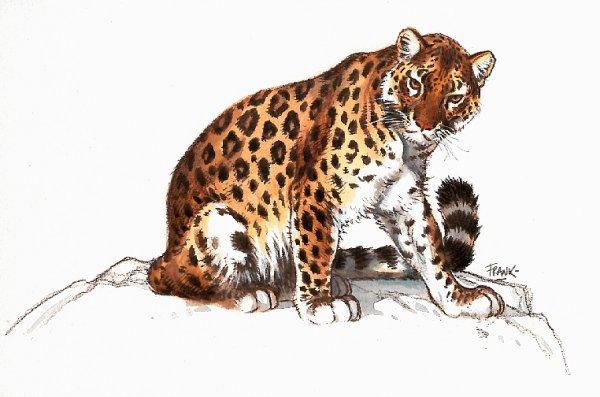 Leopard tiere bilder