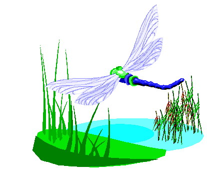 Libellen tiere bilder