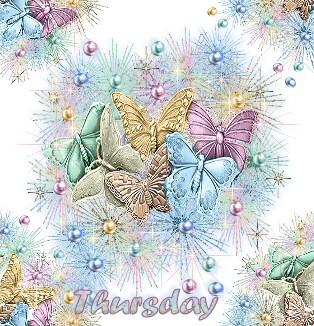 Schmetterlinge tiere bilder