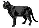 Schwarze katze tiere bilder