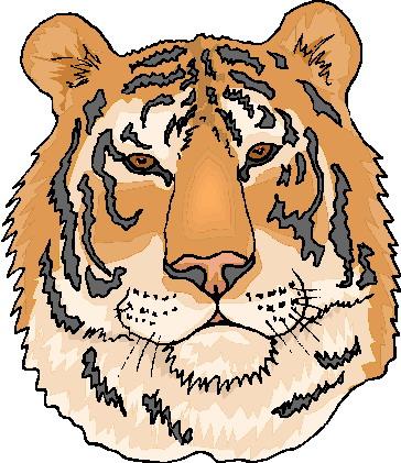 Tigers tiere bilder