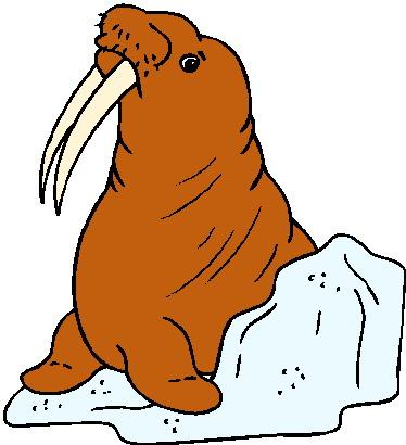 Walross tiere bilder