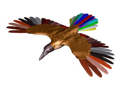 Andere vogels vogel bilder
