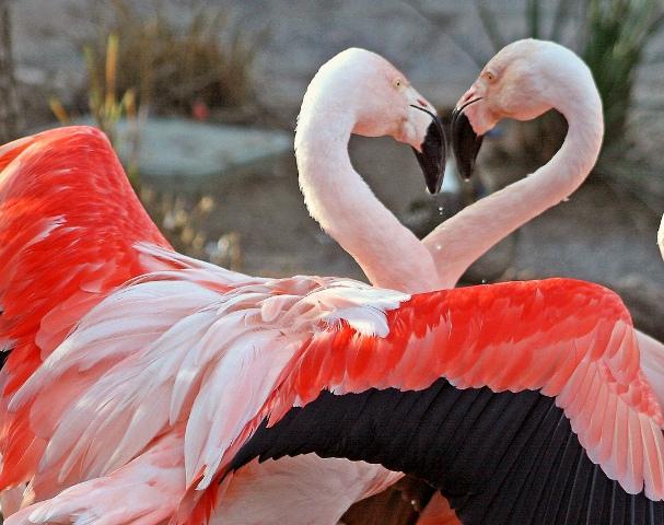 Flamingo vogel bilder