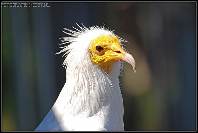 Geier vogel bilder