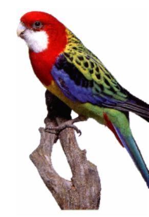 Sittiche vogel bilder