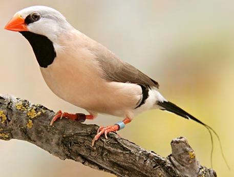 Sturmer kuchen vogel bilder