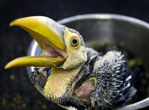 Tukan vogel bilder