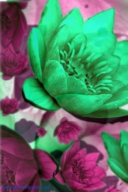 Blumen wallpapers