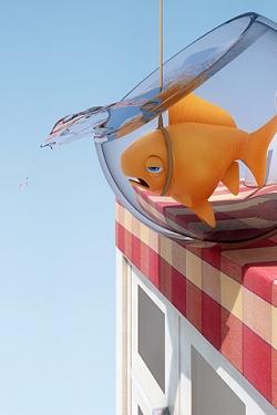 Fische wallpapers