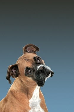 Hunde wallpapers