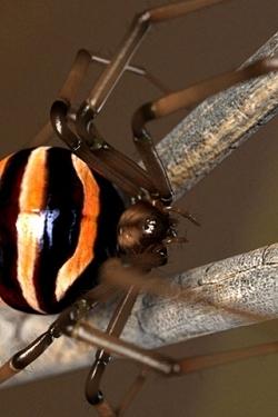 Insekten wallpapers