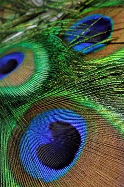 Vogel wallpapers