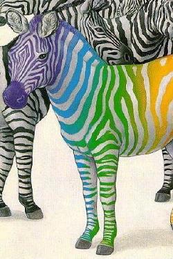Zebra wallpapers