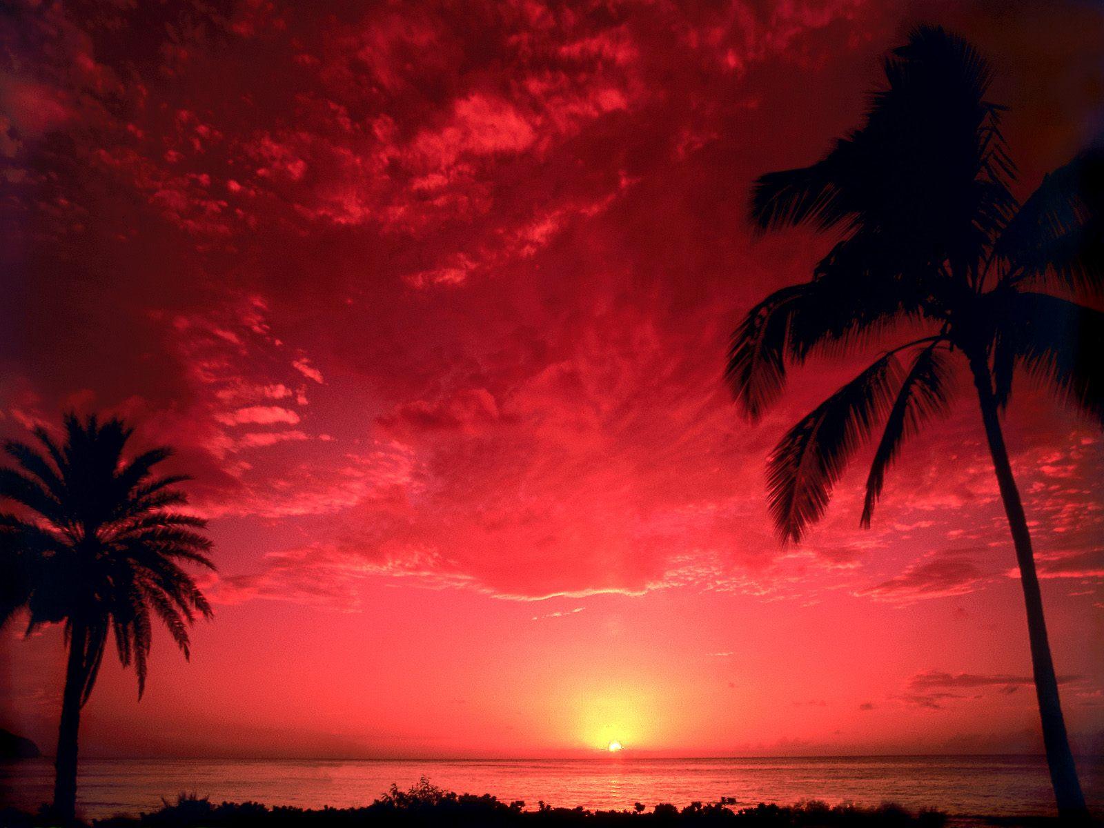 هواي Hawaii والطبيعة تتكلم Wallpaper_hawaii_animaatjes-51