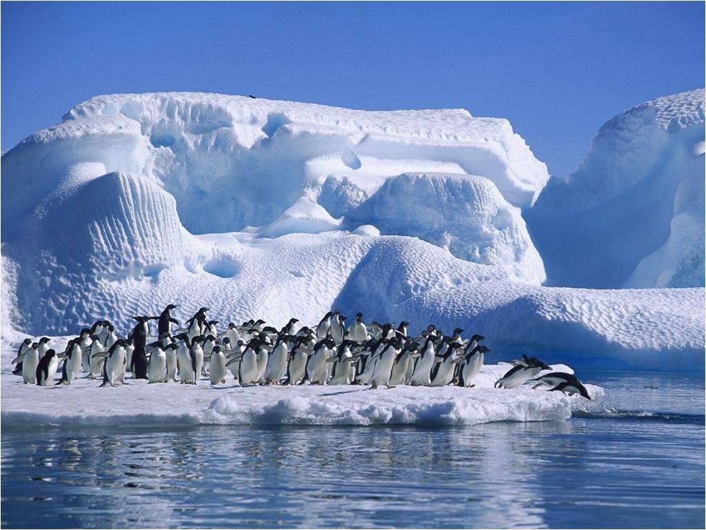 Pinguine wallpapers