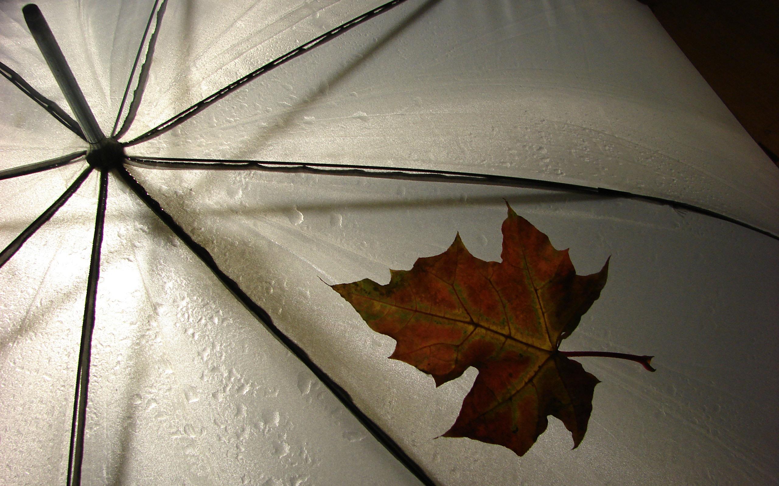 Regen wallpapers