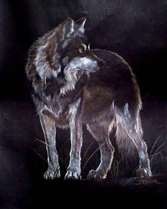 wallpaper  animaatjes wolves 25650
